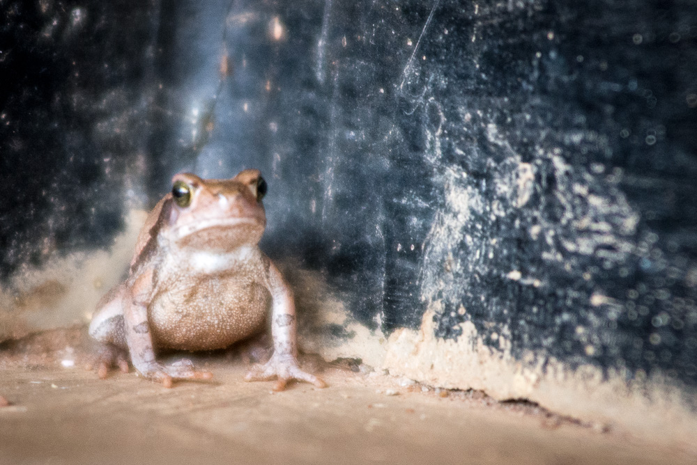 Frog_02